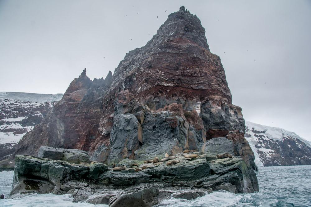 Antarctic fur seals at Peter 1 Island a probably active volcano