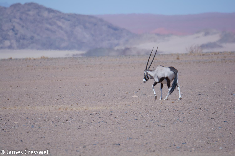 An Oryx