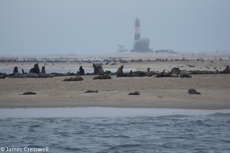 Cape fur seals at Walvis Bay, Namibia