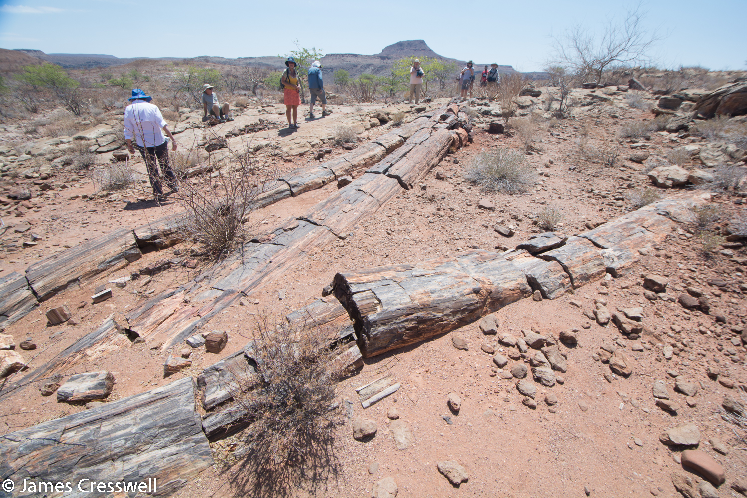 270ma Permian petrified trees which grew in cold humid conditions and were up to 30m high. The trees are contained within fluvial sediments of the Karoo supergroup.