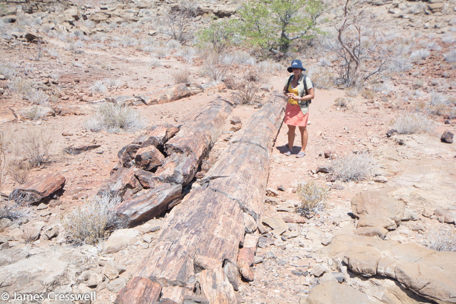 Nicole Grünert with 270ma Permian petrified trees which grew in cold humid conditions and were up to 30m high. The trees are contained within fluvial sediments of the Karoo supergroup. Namibia.