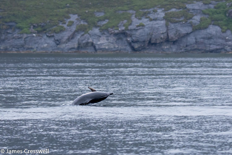Dolphin, Skye