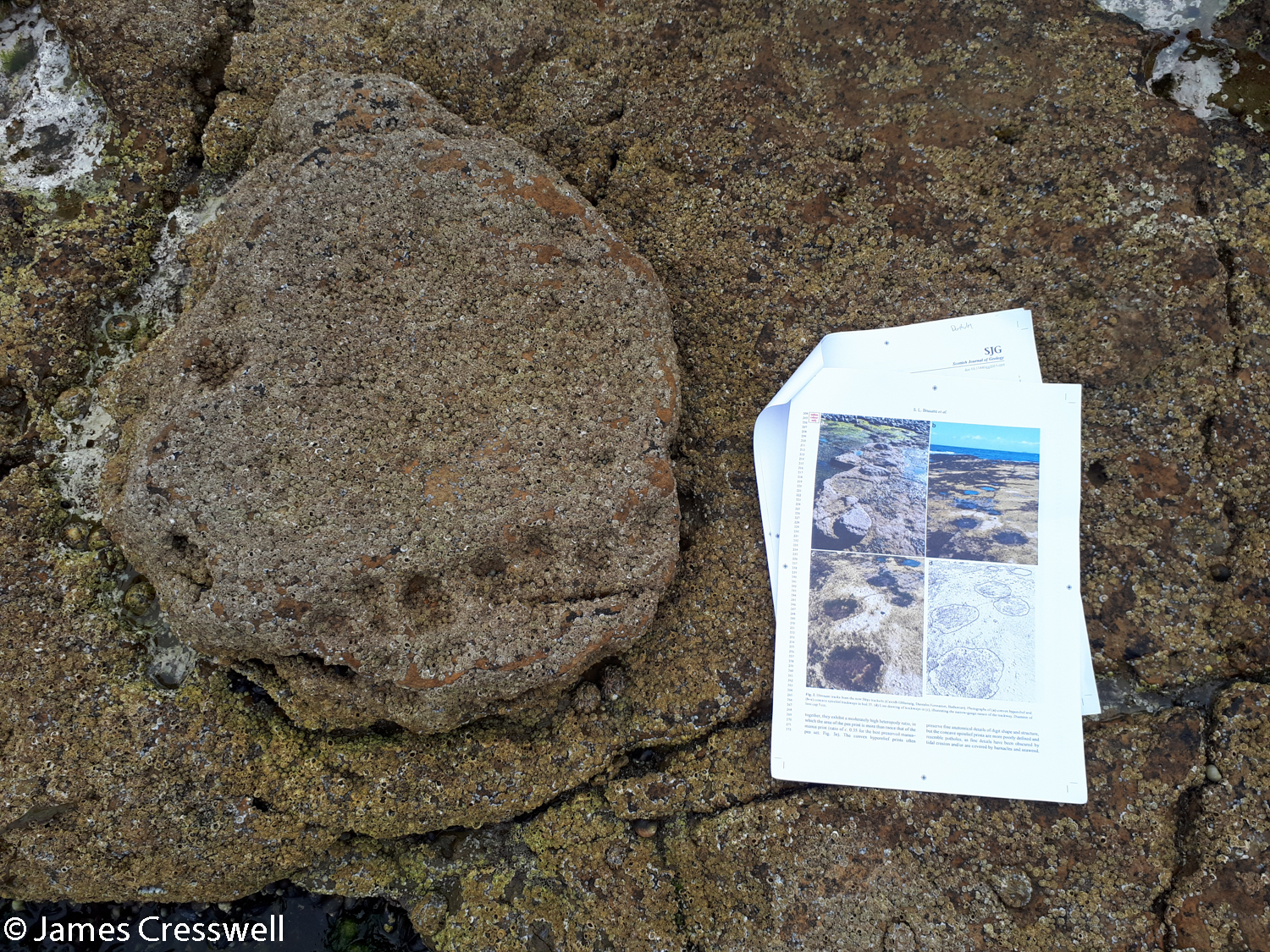 A sauropod track and scientific paper describing the trackway at Duntulm