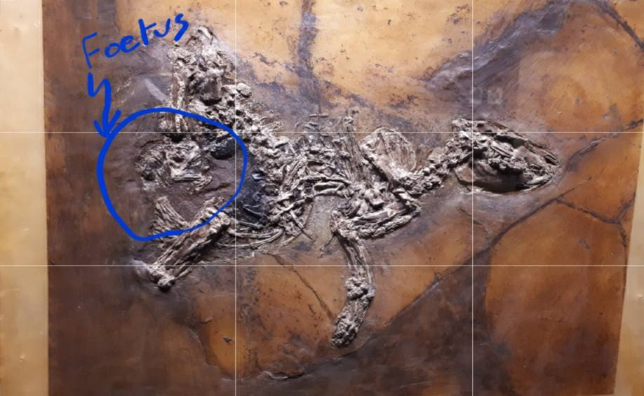 Fossilised pregnant horse