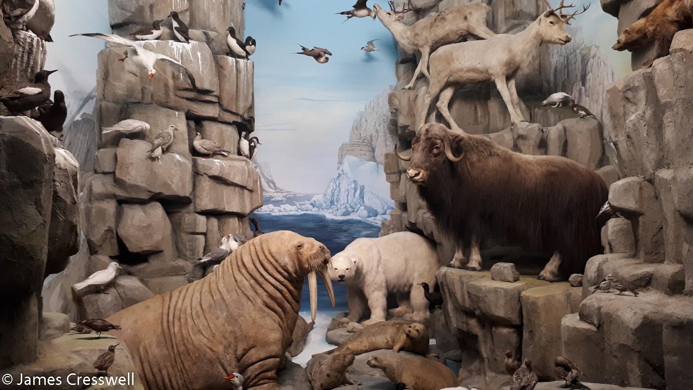 An Arctic diorama