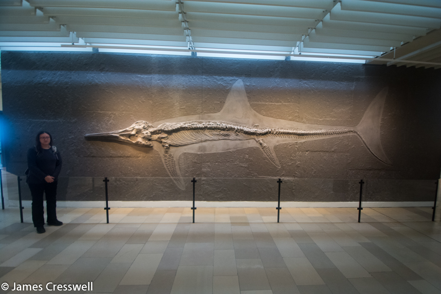 Lady standing next to an ichthyosaur fossil