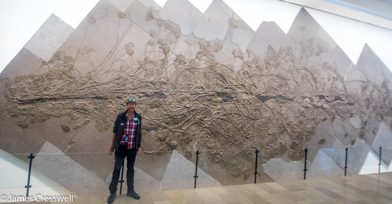 Man standing next to 18m crinoid fossil