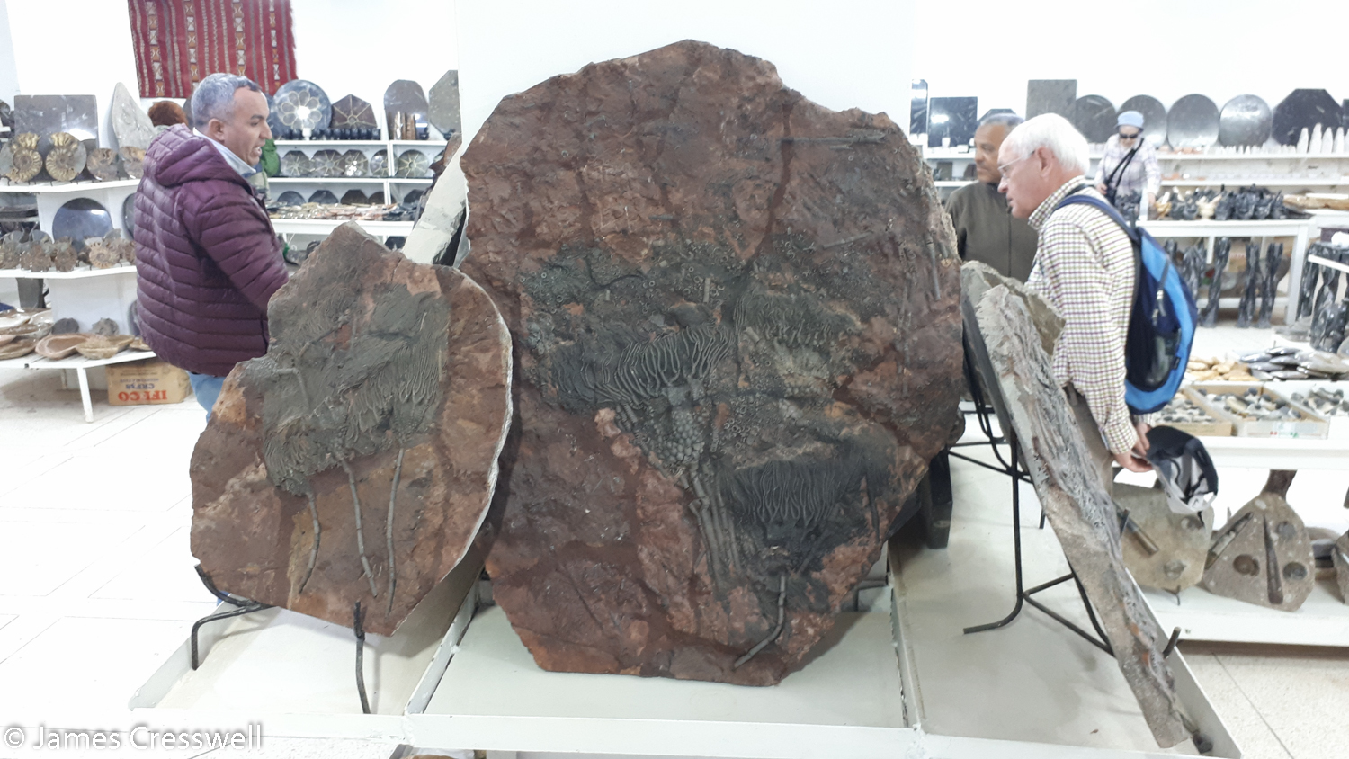 Large fossils for sale in a shop
