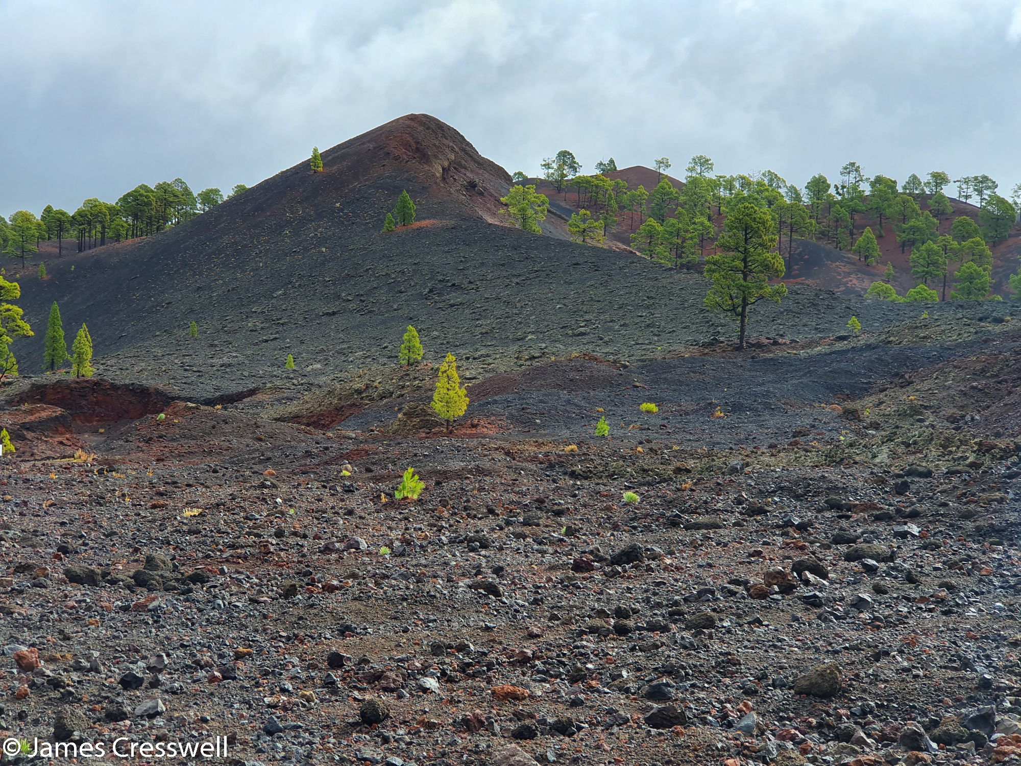 Trees growing on volcanic material