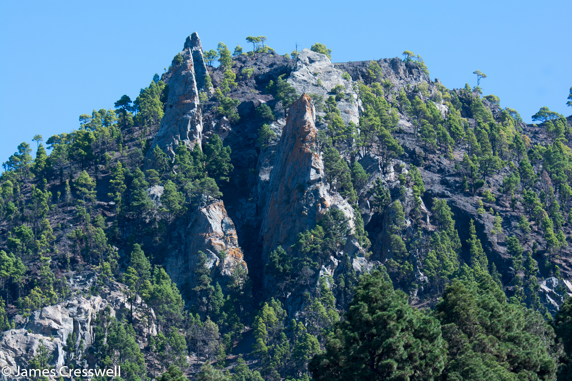 Trees on a rocky outcrop