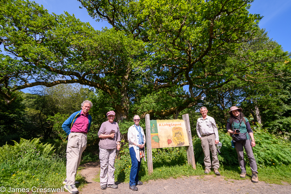 Five people stand next to a sign board in front of a large tree