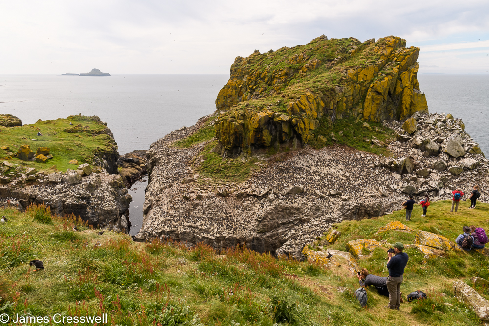 A large rock covered in a seabird colony
